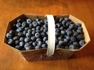 Freshly picked blueberries, these needed an additional week before they were ripe enough